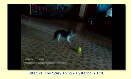 Kitten versus the Scary Thing