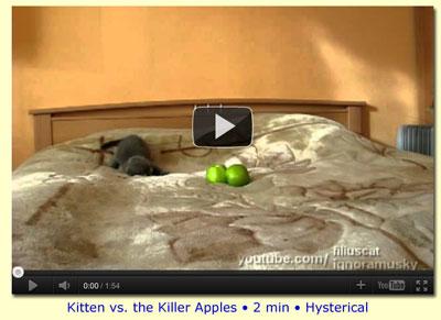 Kitten vs. The Killer Apples