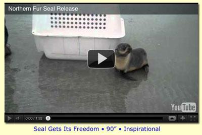 Seal Regains its Freedom